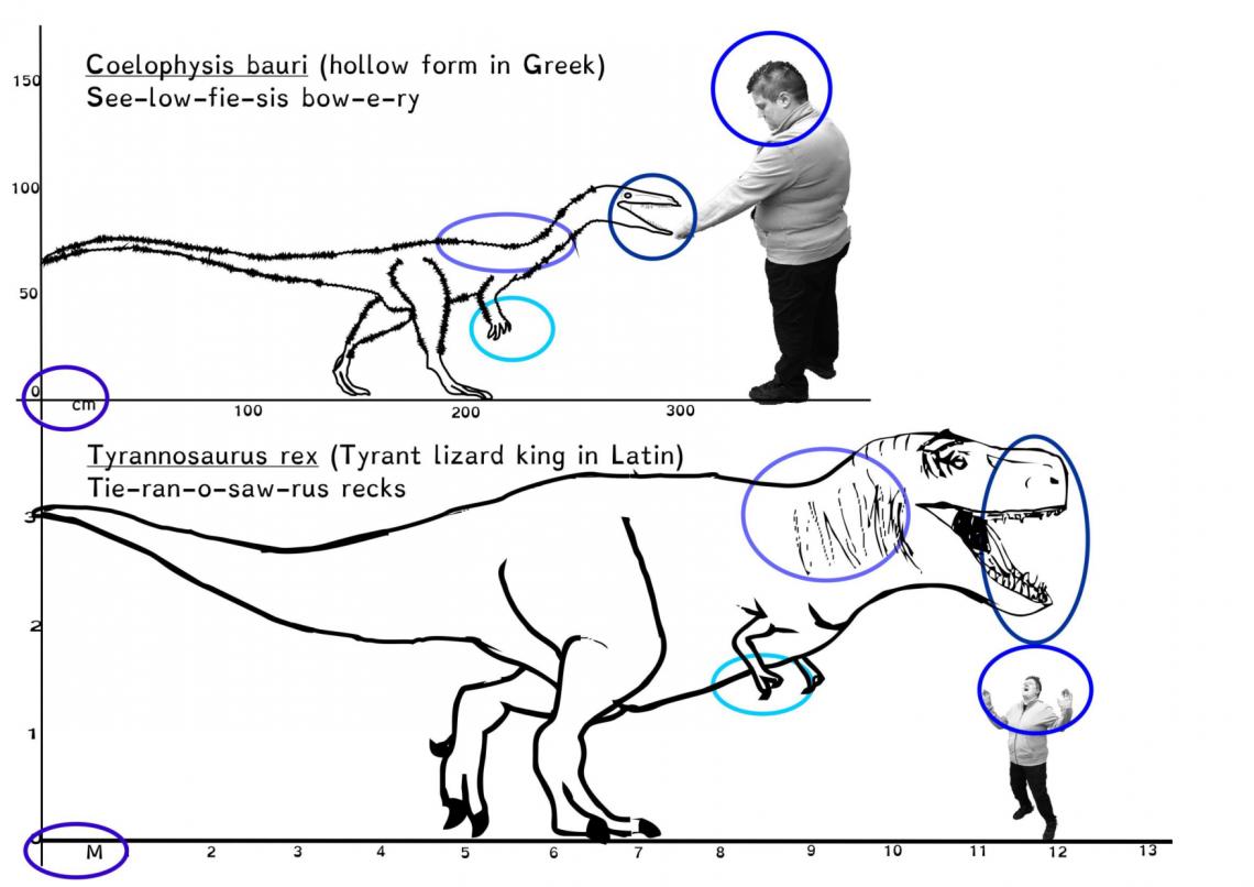 Mesozoic Maths-6